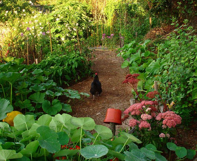 A chicken walks on the path