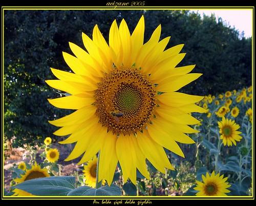 Arı balda, çiçek dalda