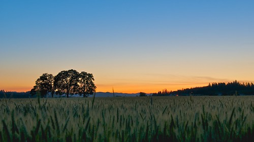 sunset field oregon farm 1755mmf28g agriculture
