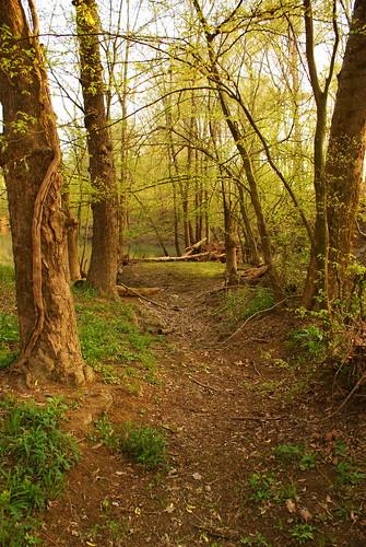 trees green tn trail pathway