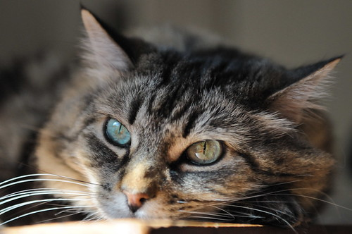 Cat eyes | by Hitchster