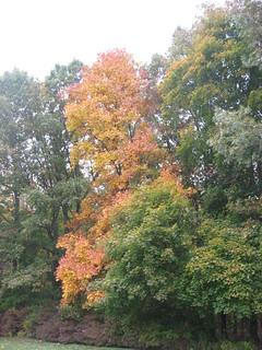 Autumn   by WhitA