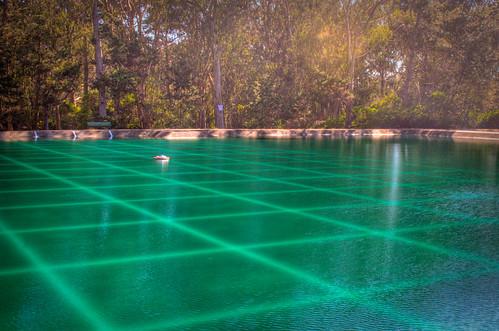 Pristine Pond