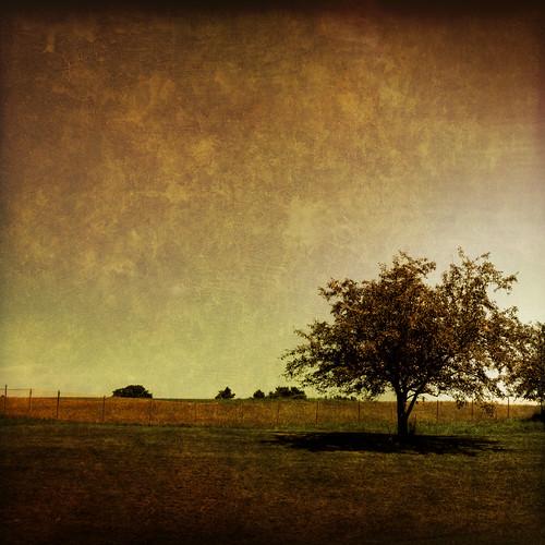 summer orange tree texture field photoshop fence landscape newhampshire nh hdr jaffrey 3xp tonemapped