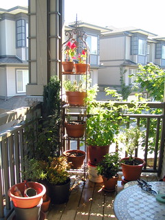 Our small balcony garden.jpg   by jfeuchter