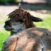 Alpaca 2of4 (20080822-120254-PJG)