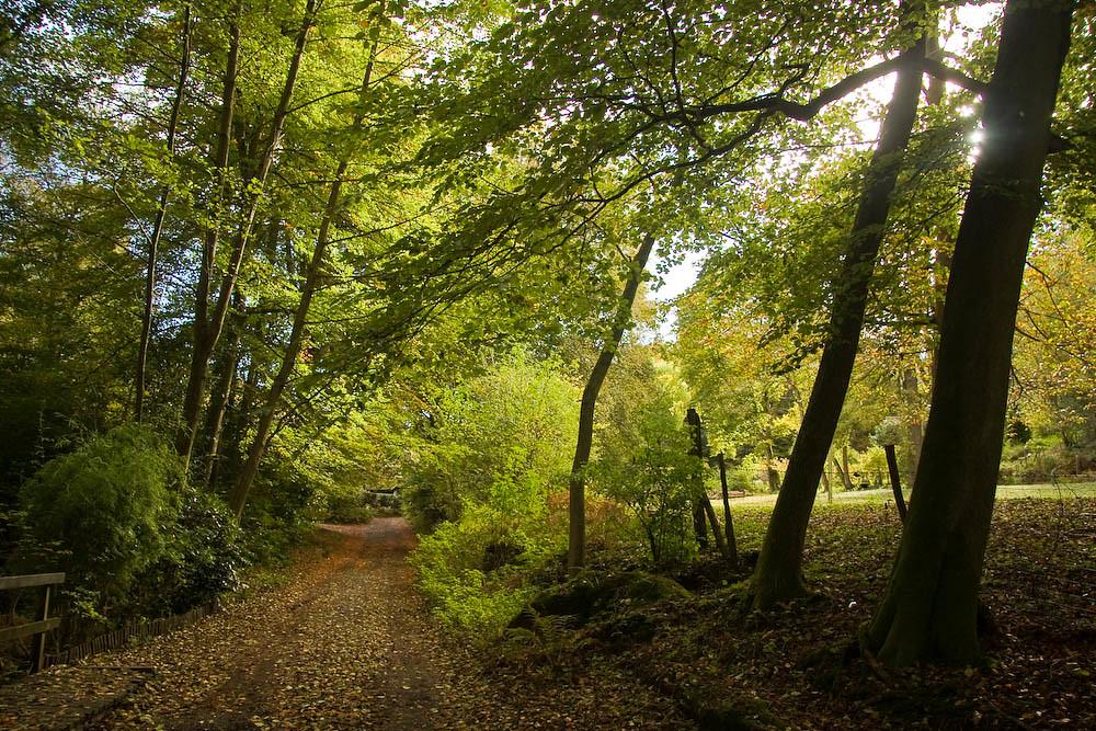 Bushy Wood