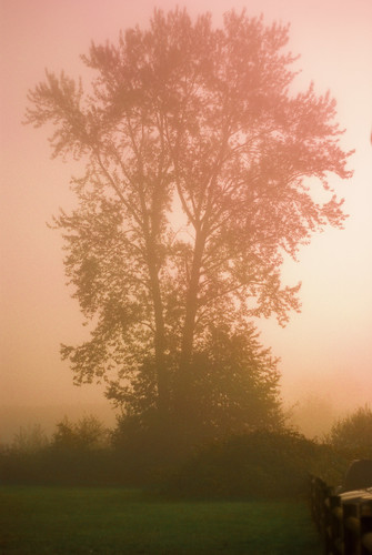 morning autumn mist tree fall field sunrise outline