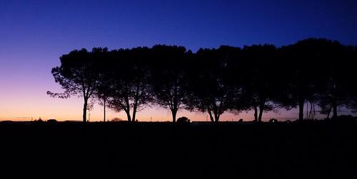 sunset sky sun silhouette tramonto blu silhouettes sunsets silouette cielo tramonti controluce ilcielo