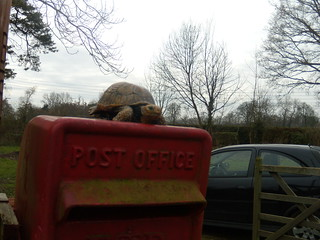 Tortoise on postbox You see some strange things on walks, unexplained things. Skeletons in phone boxes, dancing begging bears, yesterday the lifesize lower half of a terracotta warrior, and now this. Some sort of statement perhaps on the speed of the post? Maidenhead to Marlow