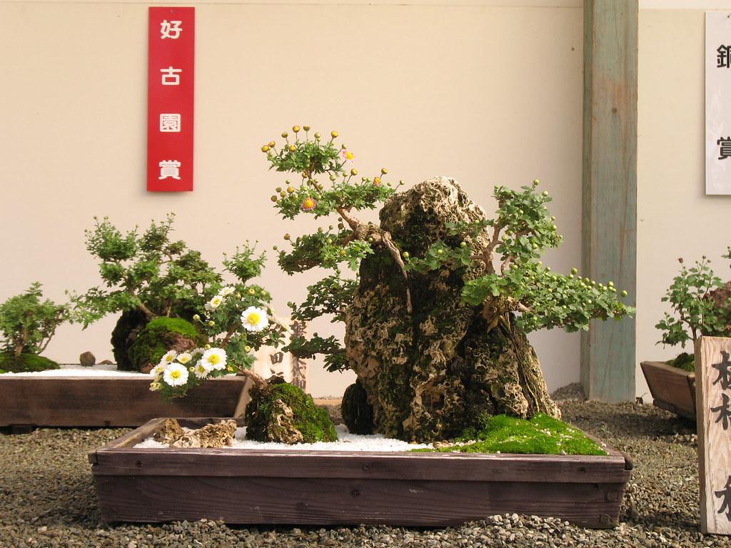Chrysanthemum Bonsai Exhibition At Himeji Castle Andrew K Flickr