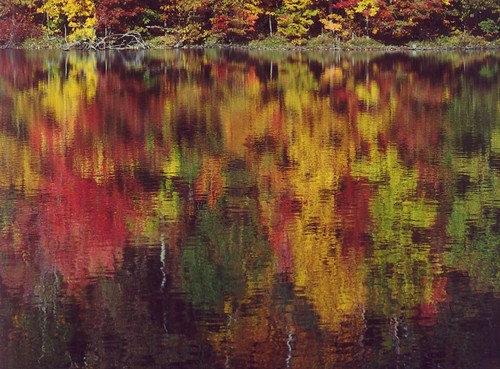 autumn leaves landscape fallcolors