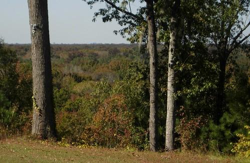 city autumn sc forest landscape southcarolina columbia swamp bluff steep calhouncounty richlandcounty