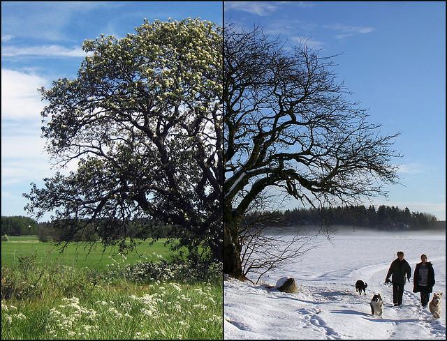 Summer vs. Winter