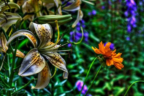 flower 50mm colorado coloradosprings hdr photomatix hdraward canondigitalrebelxsi