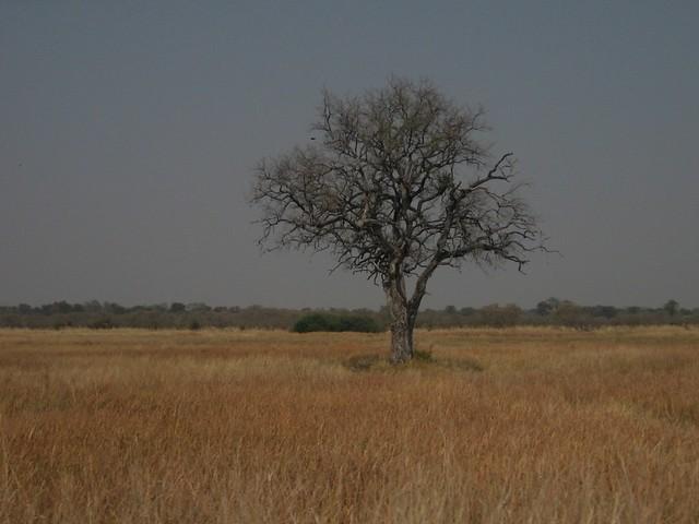 Savana a Savuti