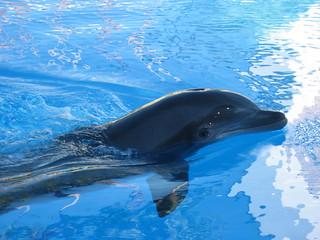 Dolphin   by Mrs. Gemstone