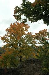 Autumn / Есен