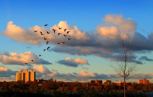 nyc morning birds sunrise canon duck flushingmeadows canonef28135mmf3556isusm 50d explored explore27 canon50d lenscraft sunrisebirds