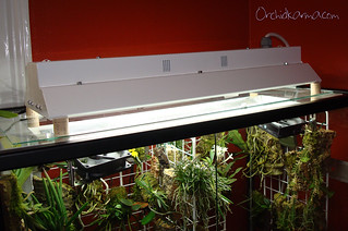 Warm vivarium upgrade   by orchidkarma