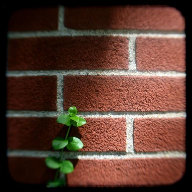 bricks and vine