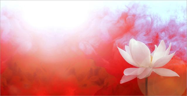 Lotus Flower An Album On Flickr