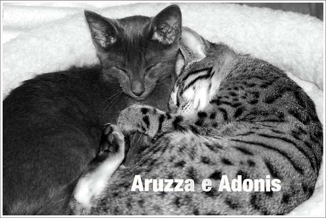 Aruzza e Adonis