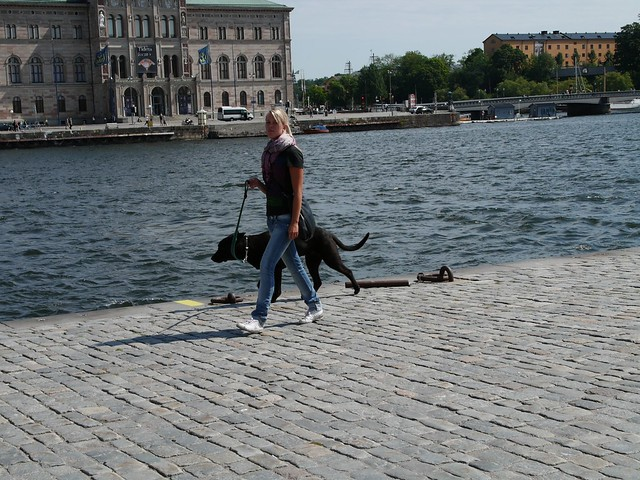 Swedish girl walking her dog L1100854