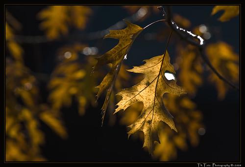 Herbslaub - Autumn leaves