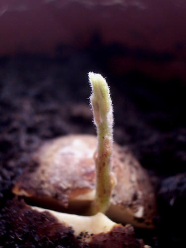 Shoot growth | by Maria Keays