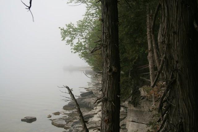 Foggy Shoreline