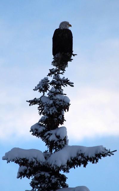 Lone sentinel on a snowy perch