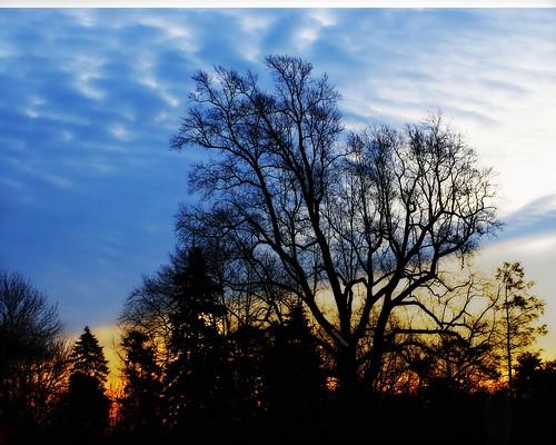 trees newyork silhouette clouds sunrise pentax cove glen jjp k200d