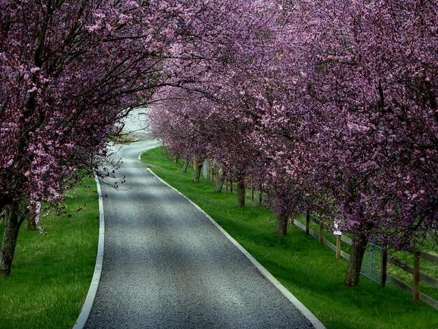 Plum Tree Lane