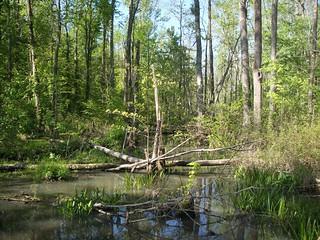 Summit Haw River SP NC