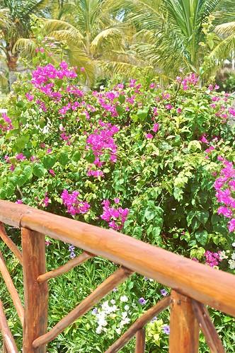 Wooden Bridge with Flowers