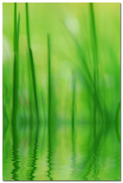 | green love |