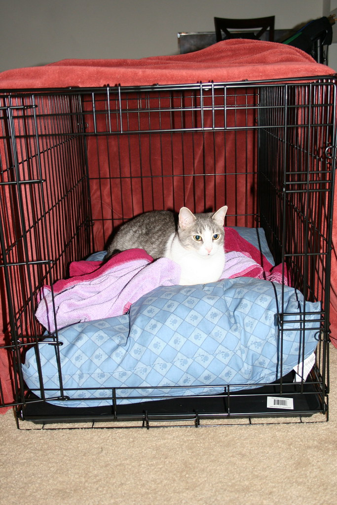 When Should You Let Your Cat Out Of The Crate
