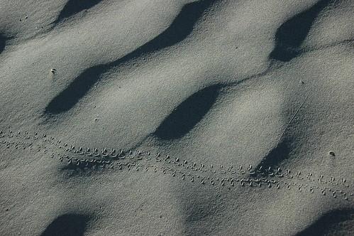 Tracks | by raindog