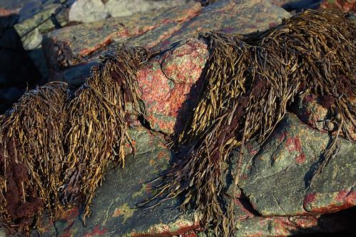 blushing rock creature