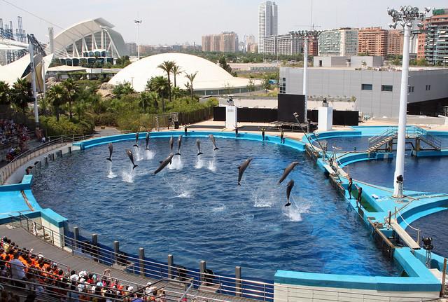 Dolphin show at L'Oceanografic, Valencia, Spain