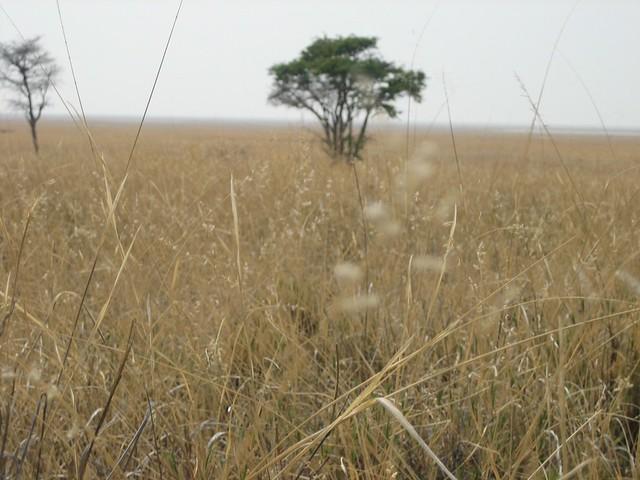 20_Rumore di fili d'erba e vento (Savuti)