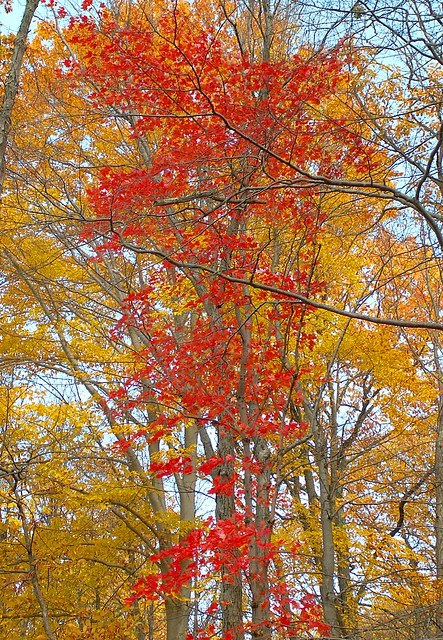 Red and Orange Fall