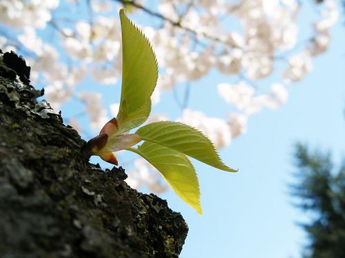Spring | by morning_rumtea