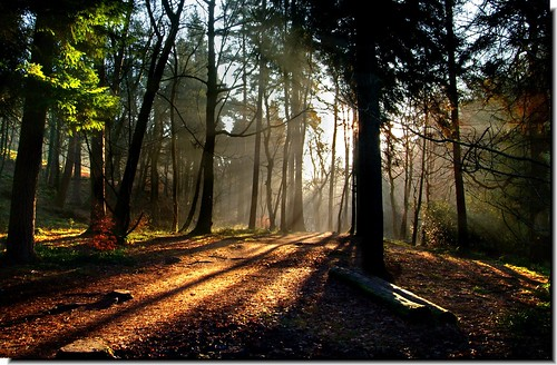 "morning autumn trees light favorite sun sunlight colour nature beautiful leaves digital outdoors happy soleil woods mood walk yorkshire scene loveit shade rays halifax 1001nights soe hebdenbridge naturesfinest calderdale oblaci hardcastlecrags fineartphotos abigfave anawesomeshot aplusphoto theunforgettablepictures brillianteyejewel naturesoutpost goldstaraward damniwishidtakenthat llgeoff ""flickraward"" 1001nightsmagiccity mygearandmepremium mygearandmebronze mygearandmesilver mygearandmegold mygearandmeplatinum mygearandmediamond"