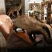 Stuffed badger by slazebni