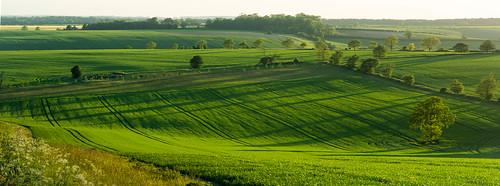 sunset sun tree green weather yellow rural landscape outdoors countryside spring flickr sunny olympus hampshire hills serene 75300mm omd ashe lightroom 2015 m43 mft lr6 em5 microfourthirds mzuiko em5markii em5mark2 em5mk2