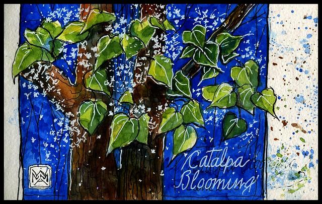 Catalpa Fallings