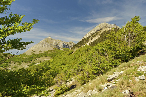 travel trees mountain nature nationalpark hill mount montenegro crnagora lovćen cetinje mountlovćen