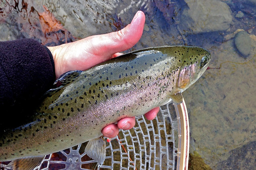 2016 - 6th Annual Fly Fest - Dec. 2-4 | by Project Healing Waters Fly Fishing - Northern VA